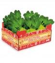 kasse med kålrabi